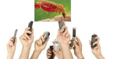 malaria dies because of phonr